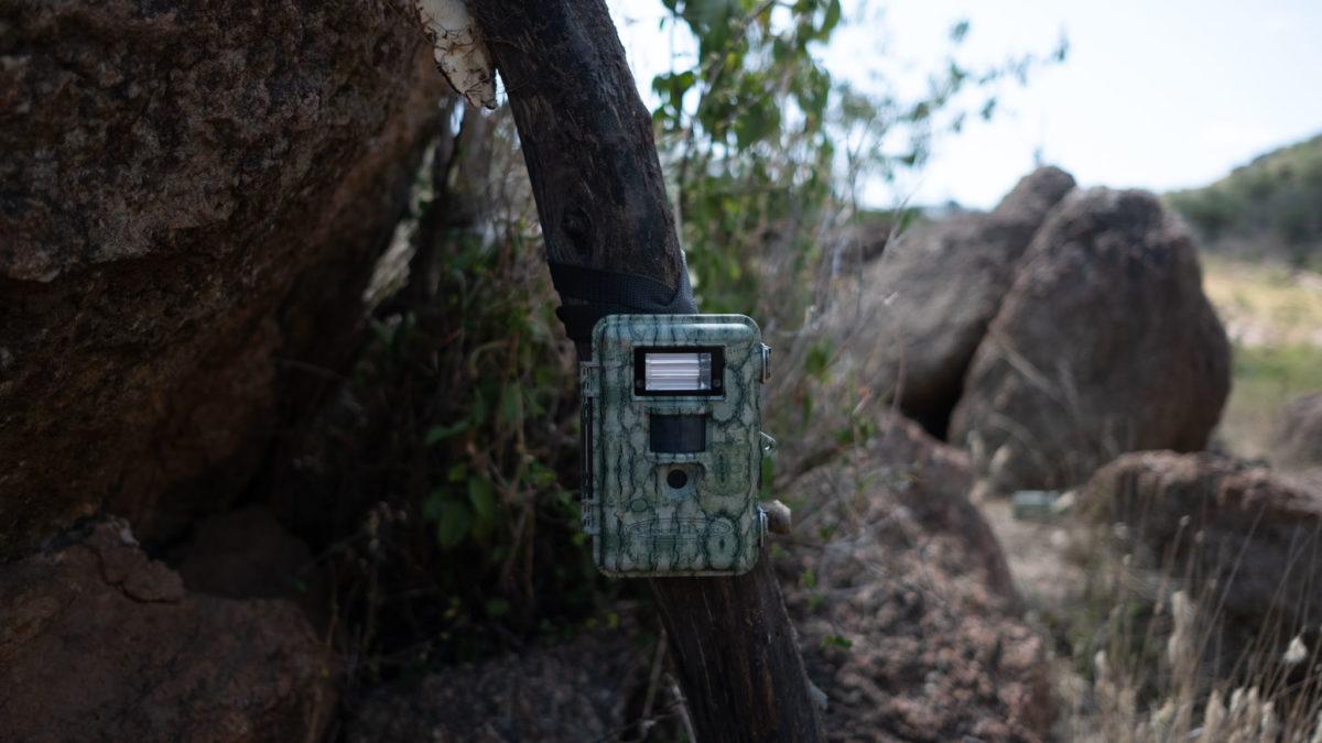 Kamery leśne – czyli sposób na zabezpieczenie posesji